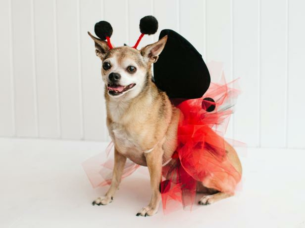 Halloween coole Hundebekleidung marienkäfer süß