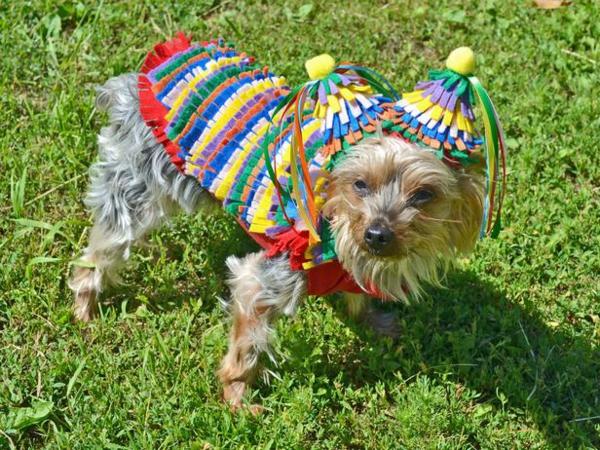 coole Hundebekleidung zu Halloween marienkäfer