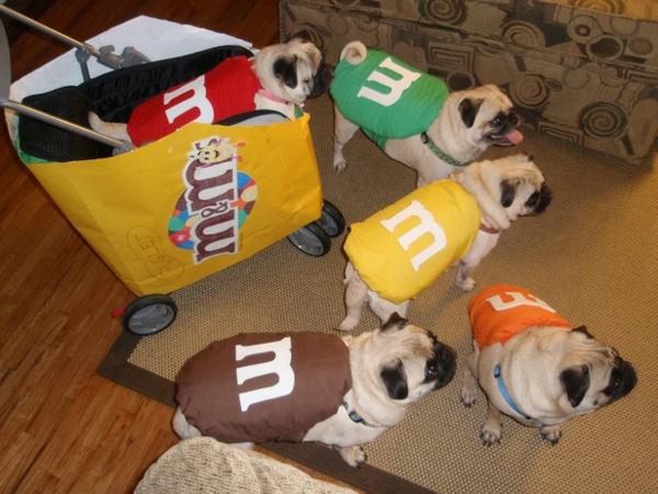 coole Hundebekleidung zu Halloween mops