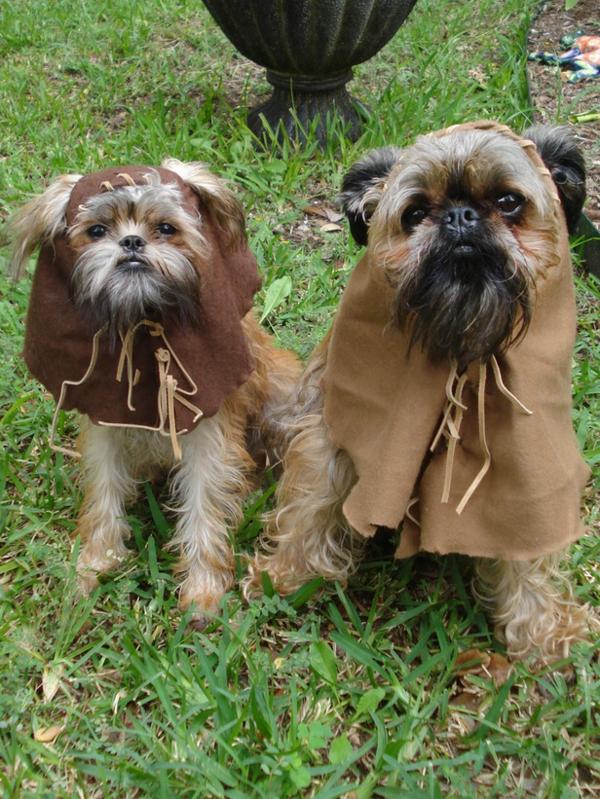 coole Hundebekleidung zu Halloween paar