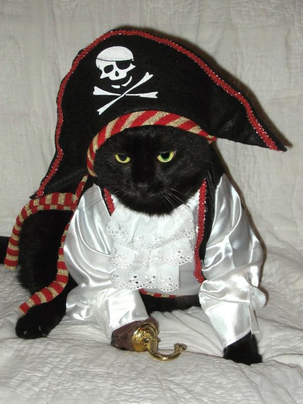 coole Hundebekleidung zu Halloween piraten katze