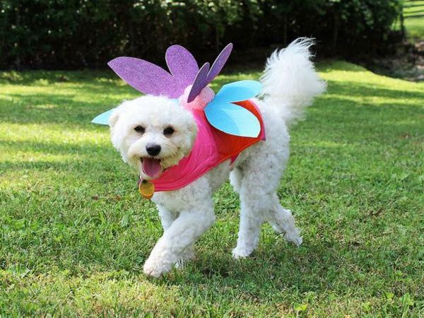 Hundebekleidung zu Halloween schmetterling