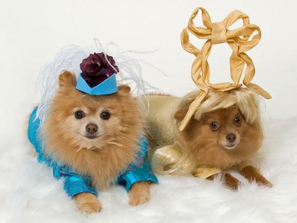coole Hundebekleidung zu Halloween tiere königlich