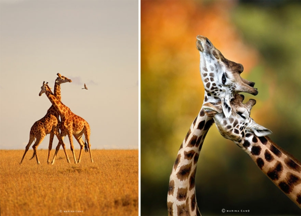 tolle fotos fotografie kunst