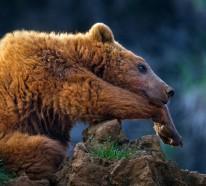 Coole Fotos von Wildtieren, aufgenommen von Marina Cano