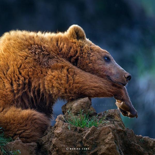 tolle fotos fotografie wildtiere bär