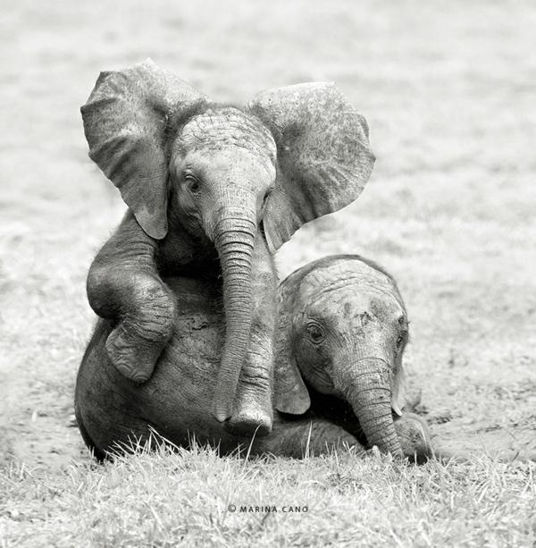 tolle fotos fotografie kunst wildtiere