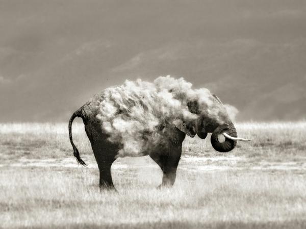 tolle fotos natur fotografie kunst