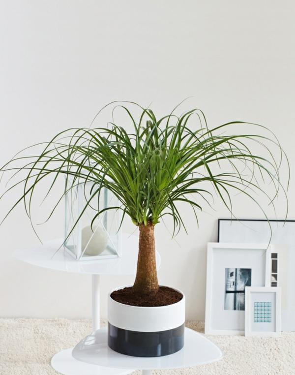 Feng Shui Pflanzen Fur Harmonie Und Positive Energie Im Wohnraum