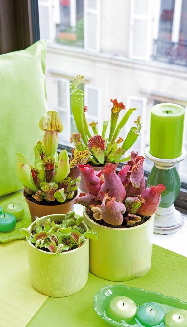 feng shui pflanzen wohnideen grünes design kerzen feng shui energie