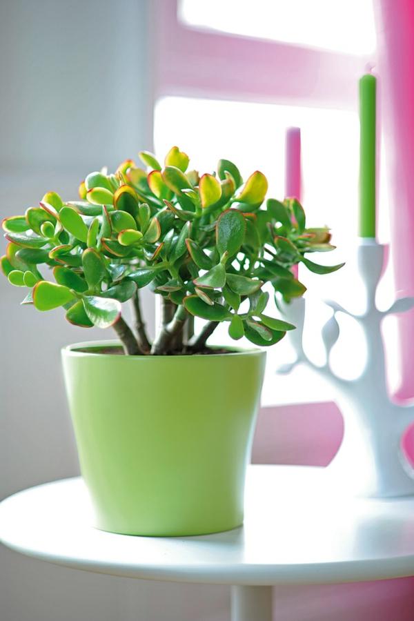 feng shui zimmerpflanzen geldbaum positive energie