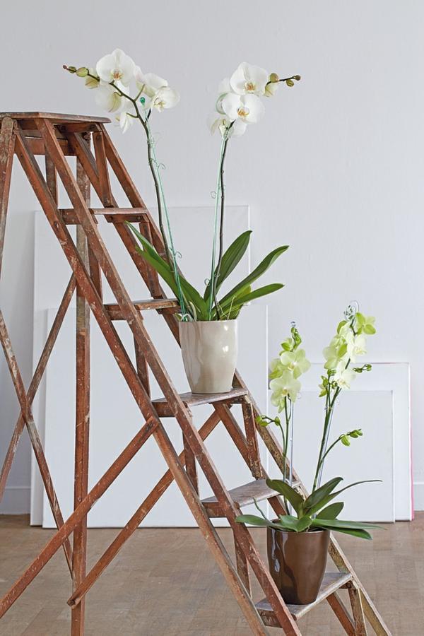 feng shui zimmerpflanzen aisatischer stil wohnideen orchideen - Gestaltungsideen Durch Orchiden