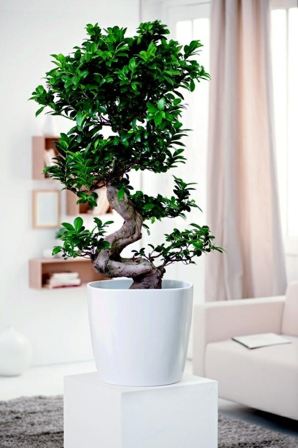 feng shui arbeitsplatz im wohnzimmer:Feng Shui Pflanzen für Harmonie ...