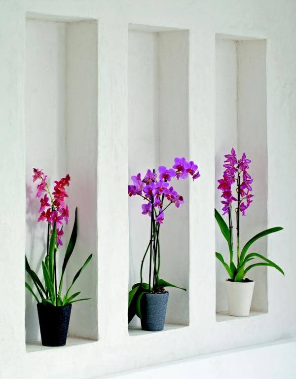 feng shui zimmerpflanzen orchideen topfpflanzen wandgestaltung