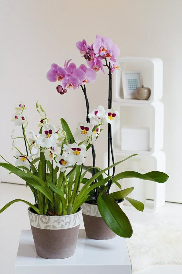 Feng Shui Arbeitsplatz Ausrichtung ? Vegdis.com Zimmerpflanzen Feng Shui Anordnen