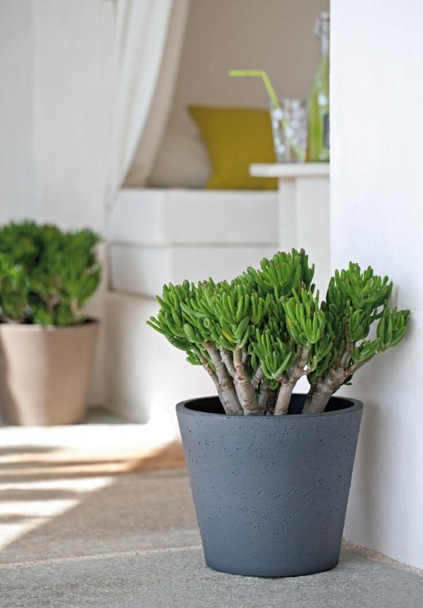 feng shui zimmerpflanzen wohnideen grüne deko ideen
