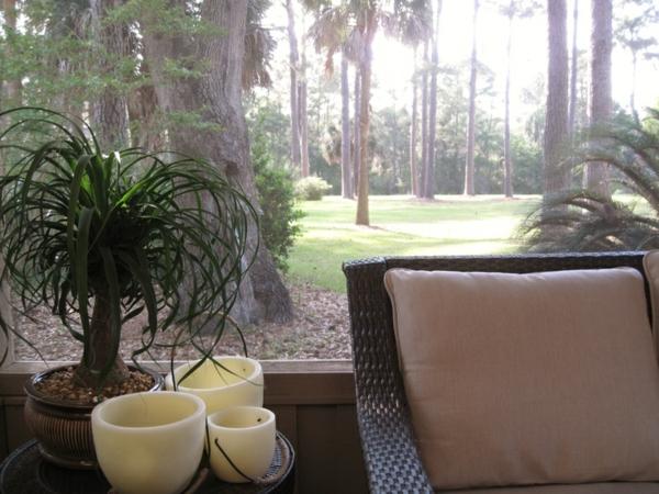 flaschenbaum pflegeleichte pflanzen palmen fürs zimmer