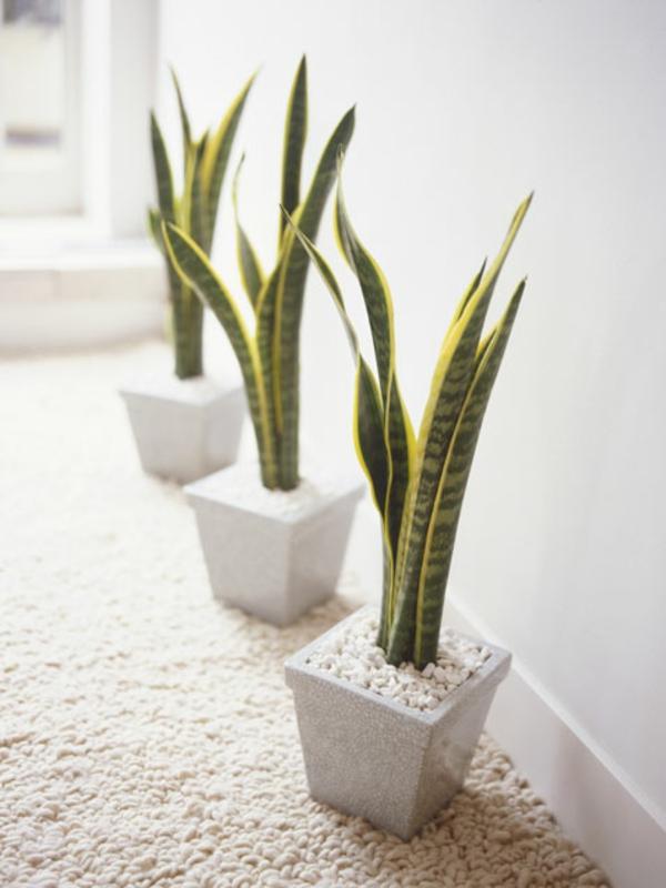 gartengestaltung garten zimmerpflanzen bilder schlange pflanze
