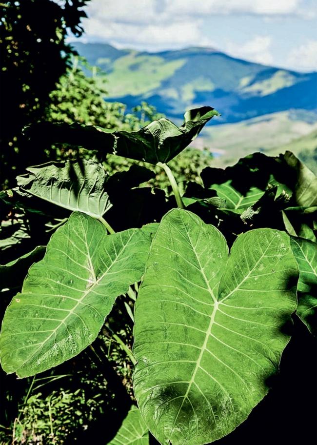 gartengestaltung pflanzen berg klima garten am hang nachhaltige architektur
