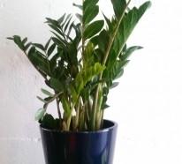 Grünpflanze Wenig Licht welche zimmerpflanzen brauchen wenig licht