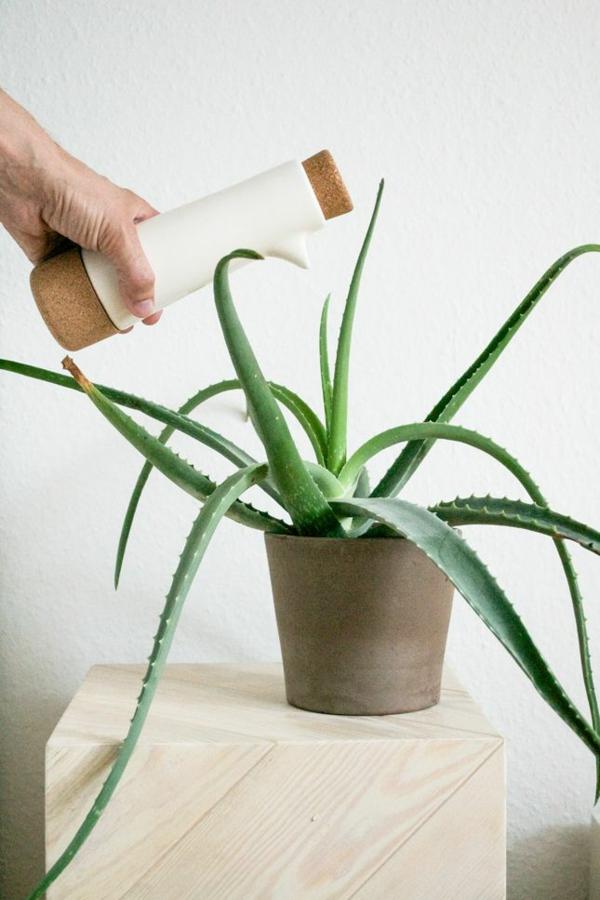 grüne zimmerpflanzen bilder topfpflanzen aloe vera pflege