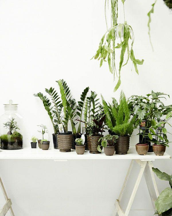 grüne zimmerpflanzen bilder topfpflanzen arten