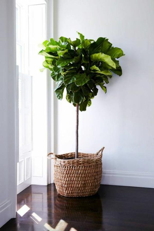 Zimmergr npflanzen bilder und inspirierende deko ideen for Plantas de interior lidl