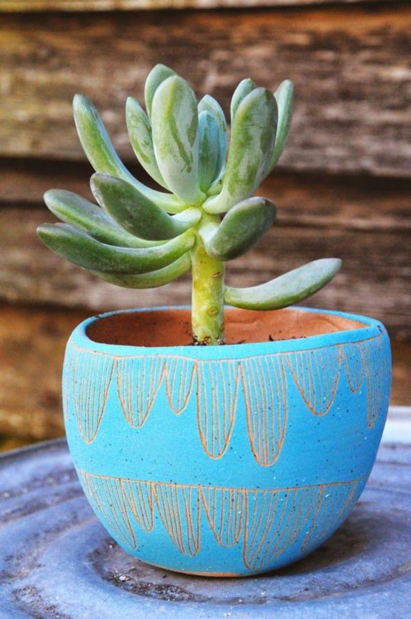grüne zimmerpflanzen bilder topfpflanzen sukkulenten blumengefäße
