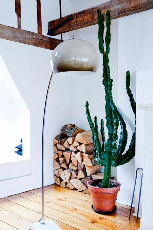 grüne zimmerpflanzen bilder topfpflanzen