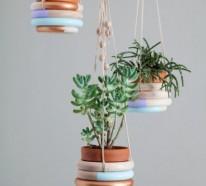 Hängende Zimmerpflanzen – Bilder von anreizenden Blumenampeln