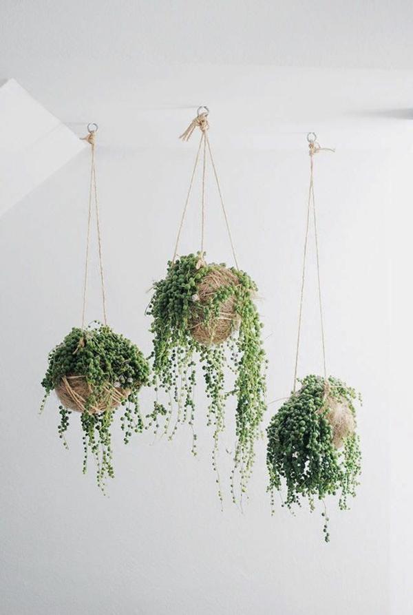 hängende zimmerpflanzen deko ideen pflanzenampel topfpflanzen