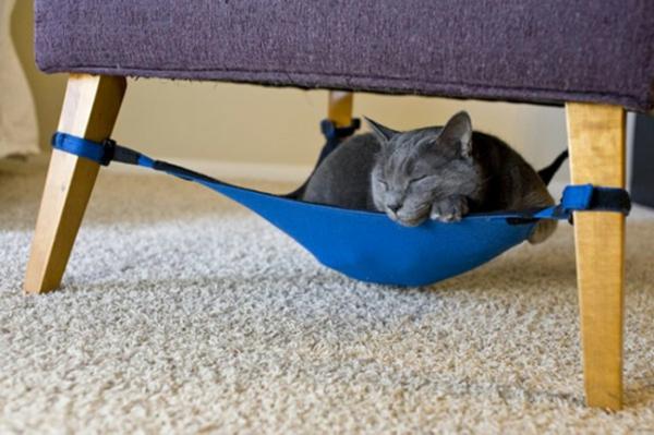 haustier sessel liegen katzen blau hängematte