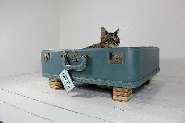 liegen katzen hunde koffer altmodisch