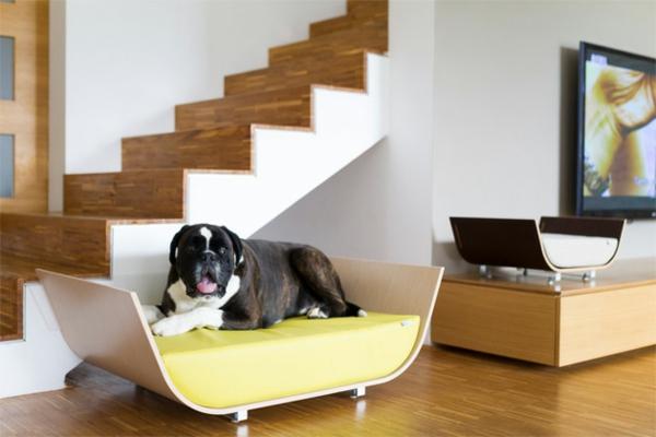 haustier möbel liegen katzen hunde treppe
