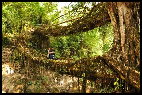 indische naturbrücken wurzel weinreben schatten