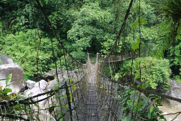indische naturbrücken wurzel weinreben wild