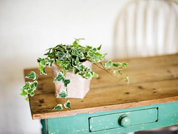 garten gestalten zimmerpflanzen englischer efeu