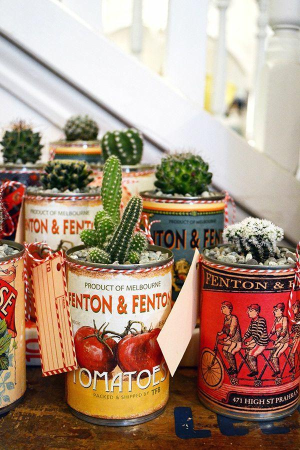 kaktus beliebteste grünpflanzen topfpflanzen kakteen