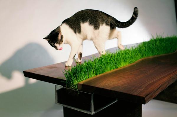 katzenmöbel umweltfreundlich design pflanzen tisch