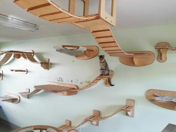 katzenmöbel holz design klettern tierspiele wand