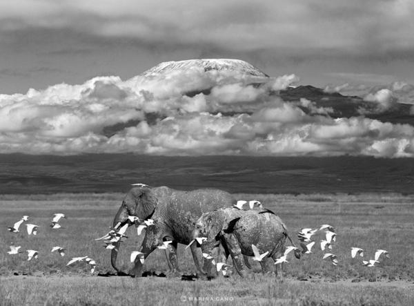 kunst kultur coole fotos fotografie elefanten