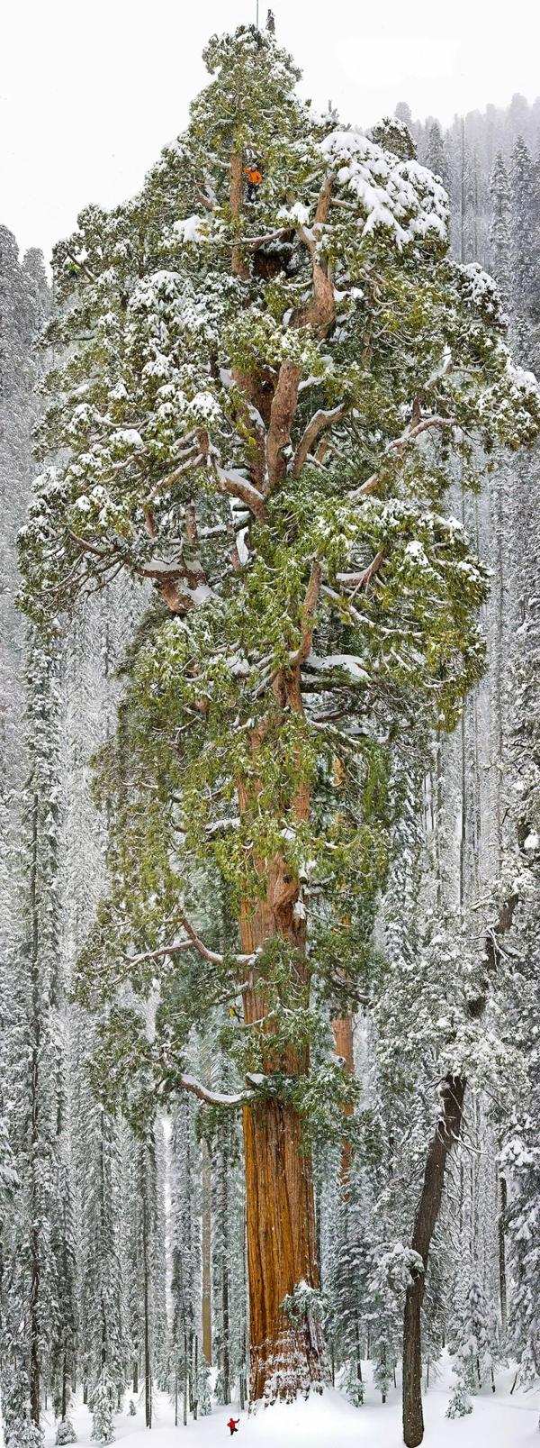 natur herrliche landschaft winter wald