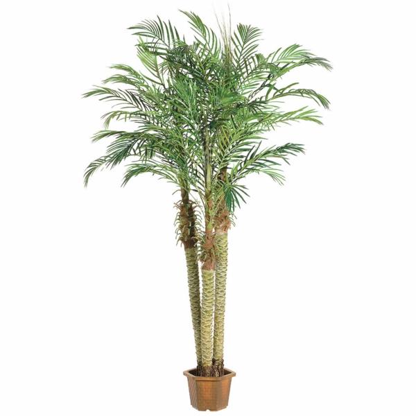 zimmerpalmen bilder - welche sind die typischen palmen arten?