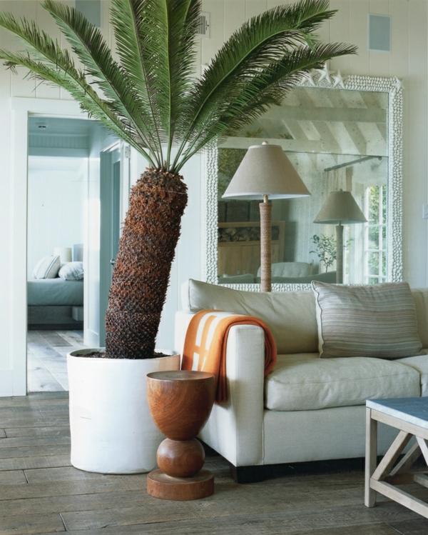 Zimmerpalmen Bilder   welche sind die typischen Palmen Arten?