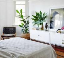 Pflanzen im Schlafzimmer – Topfblumen, die sich besonders dafür eignen