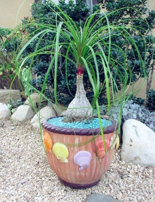 pflegeleichte zimmerpflanze flaschenbaum topfpflanzen agavegewächs