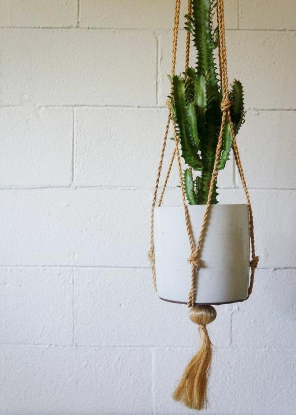 pflegeleichte zimmerpflanzen hängend topfpflanzen kaktus