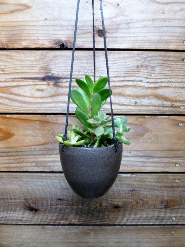 sukkulenten zimmerpflanzen grüne einrichtungsideen pflanzampel