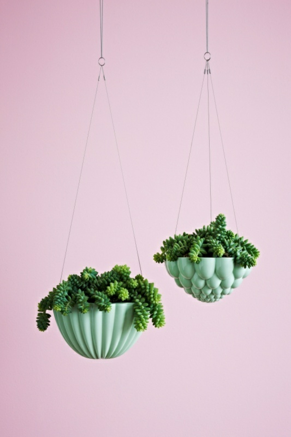 sukkulenten zimmerpflanzen hängend einrichtungsideen pflanzampel wandfarbe rosa