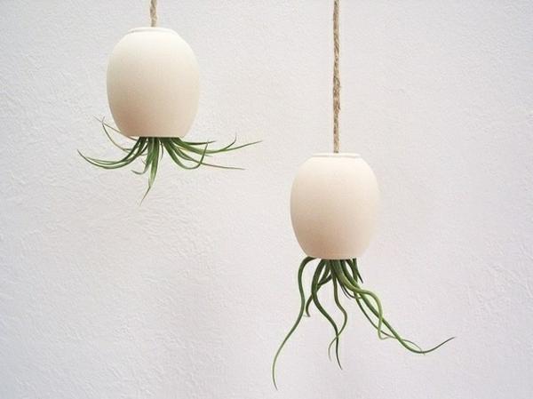 sukkulenten zimmerpflanzen hängend grüne einrichtungsideen pflanzampel